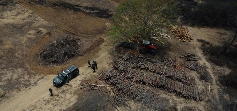Bahia: Inema detecta desmatamento em área equivalente a 590 campos de futebol