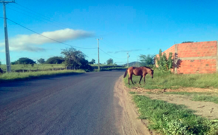 Foto: Poliana Rodrigues | Sudoeste Bahia