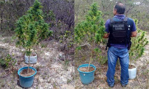 Fotos: Divulgação | Polícia Civil